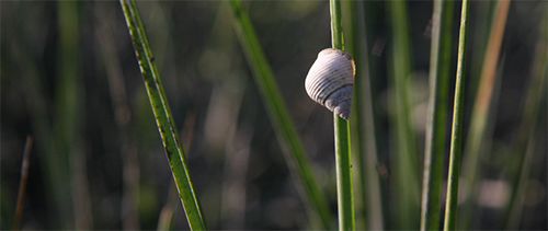 Mollusks of Florida