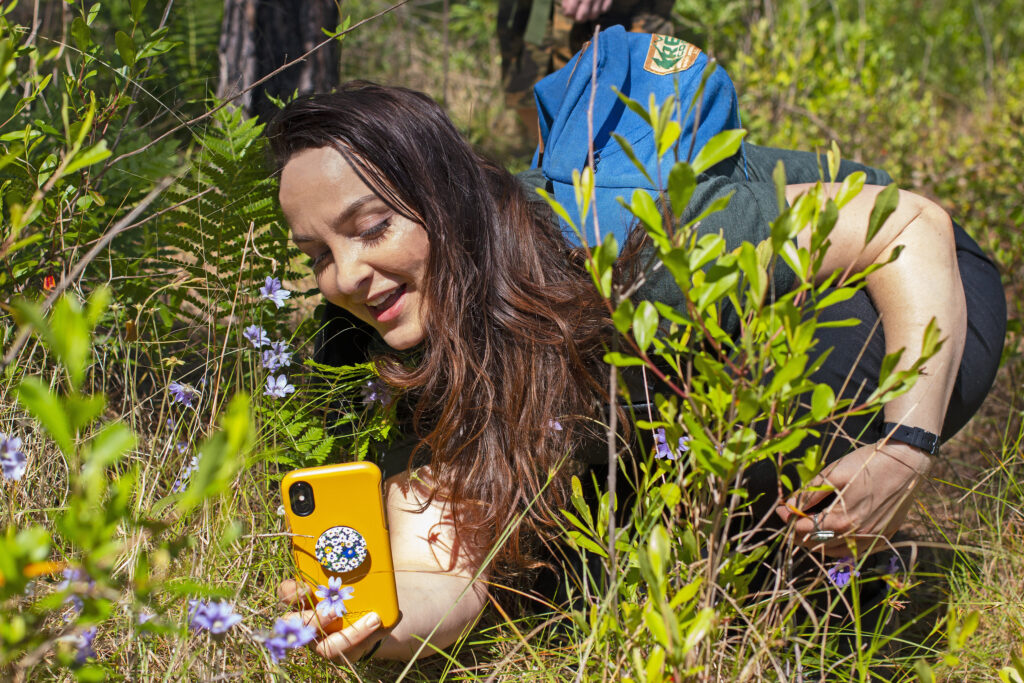 A woman uses her smart phone to make an iNaturalist observation of butterwort flowers.