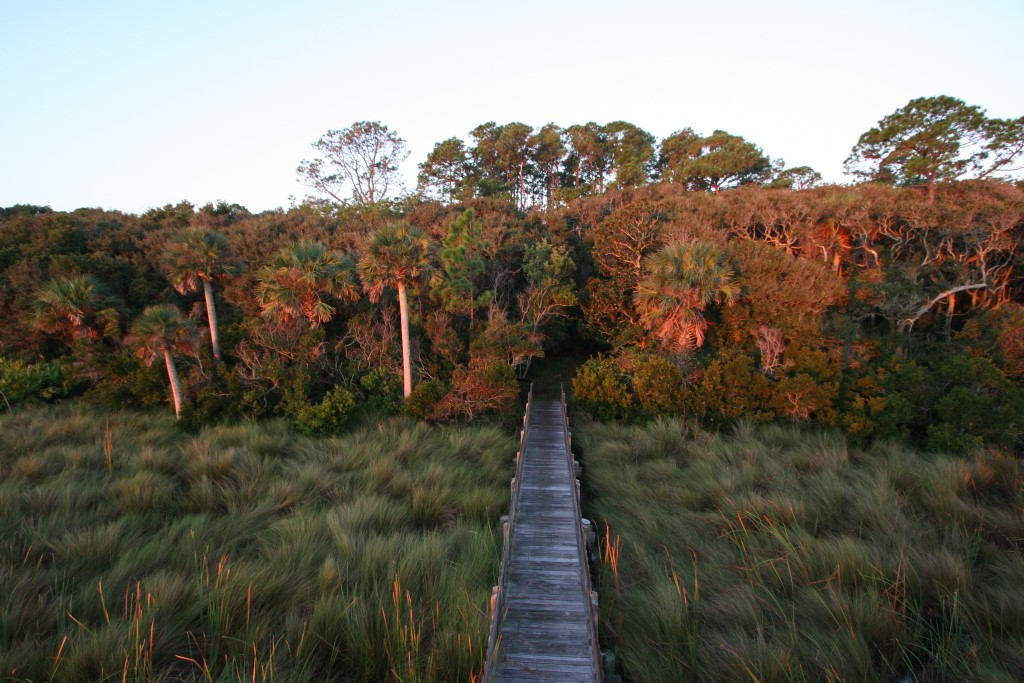 A boardwalk crosses a marsh into a hammock